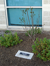 sp-plaque-tree