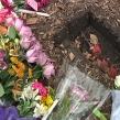 Stacy Peterson Memorial plaque stolen